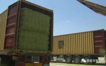 西班牙11月脱水苜蓿出口量为116,762吨